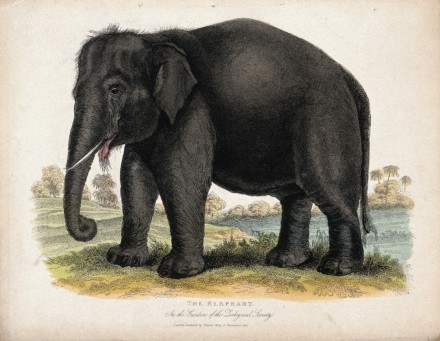 Elefanten i venterommet